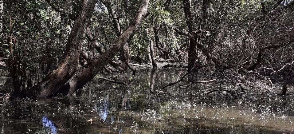 Divulgação/Salve Barra de Jangada