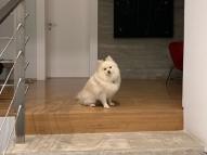 Viúva de Boechat posta foto de cão à espera do jornalista