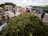 São João: busca por milho movimenta o Ceasa em PE