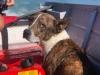Cachorro cai no mar e é resgatado por bombeiros