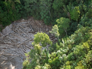 Dia da Preservação das Florestas: desmatamento cresce 4%