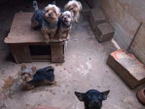 Animais são resgatados de canil clandestino