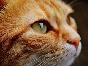 Covid-19: Brasil registra 1º caso de infecção de um gato