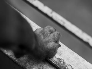 Cadela é morta como forma de oferenda por dois suspeitos