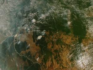 Desmatamento da Amazônia sobe 29,5% no ano