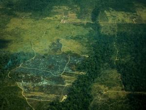 Estudo: aumento de queimadas está ligado a desmatamento